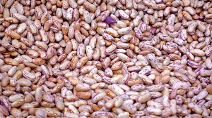 canned food - legumes