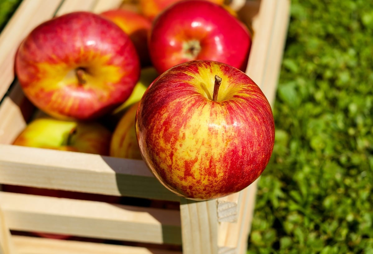 how to store apples - featured