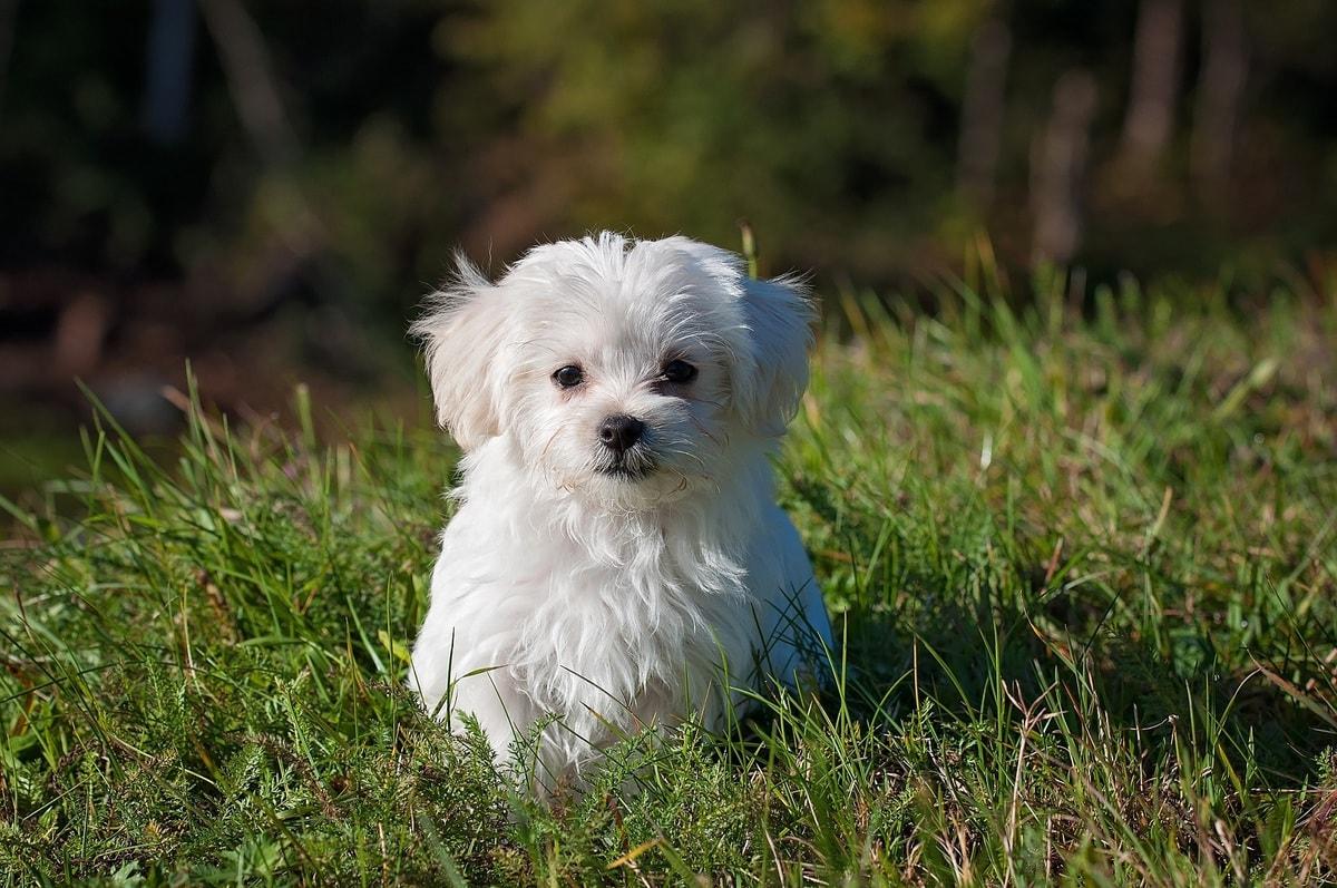 new puppy checklist - featured