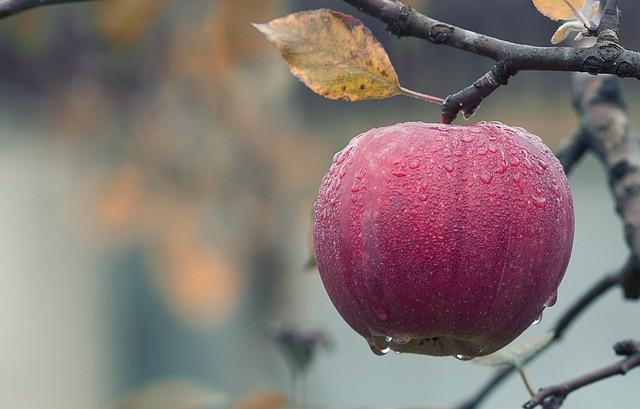 how to save money on groceries - seasonal