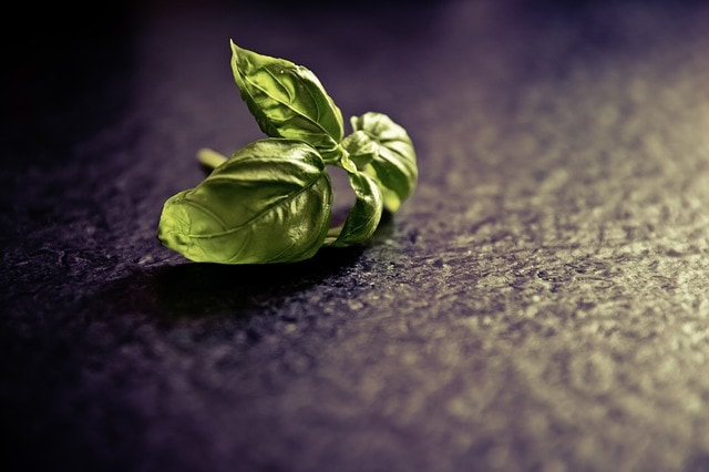 how to store basil - bad